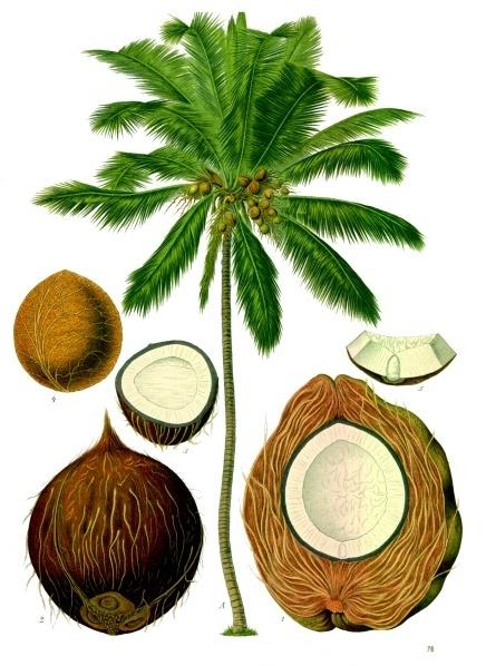 Planche coco